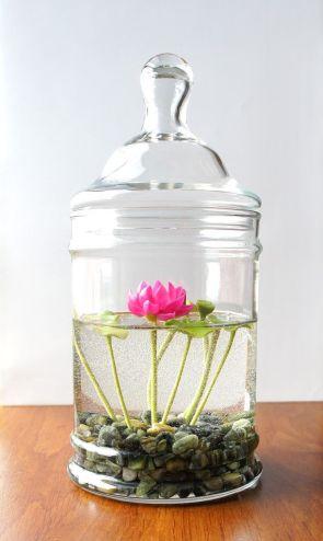 aquatic-plant