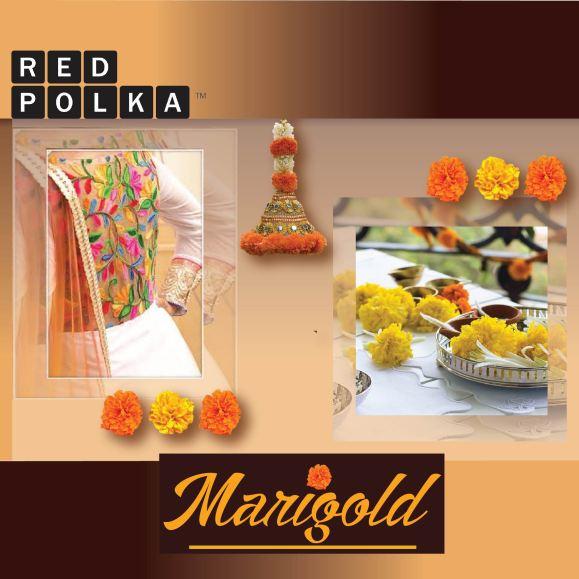 marigold watsapp-01